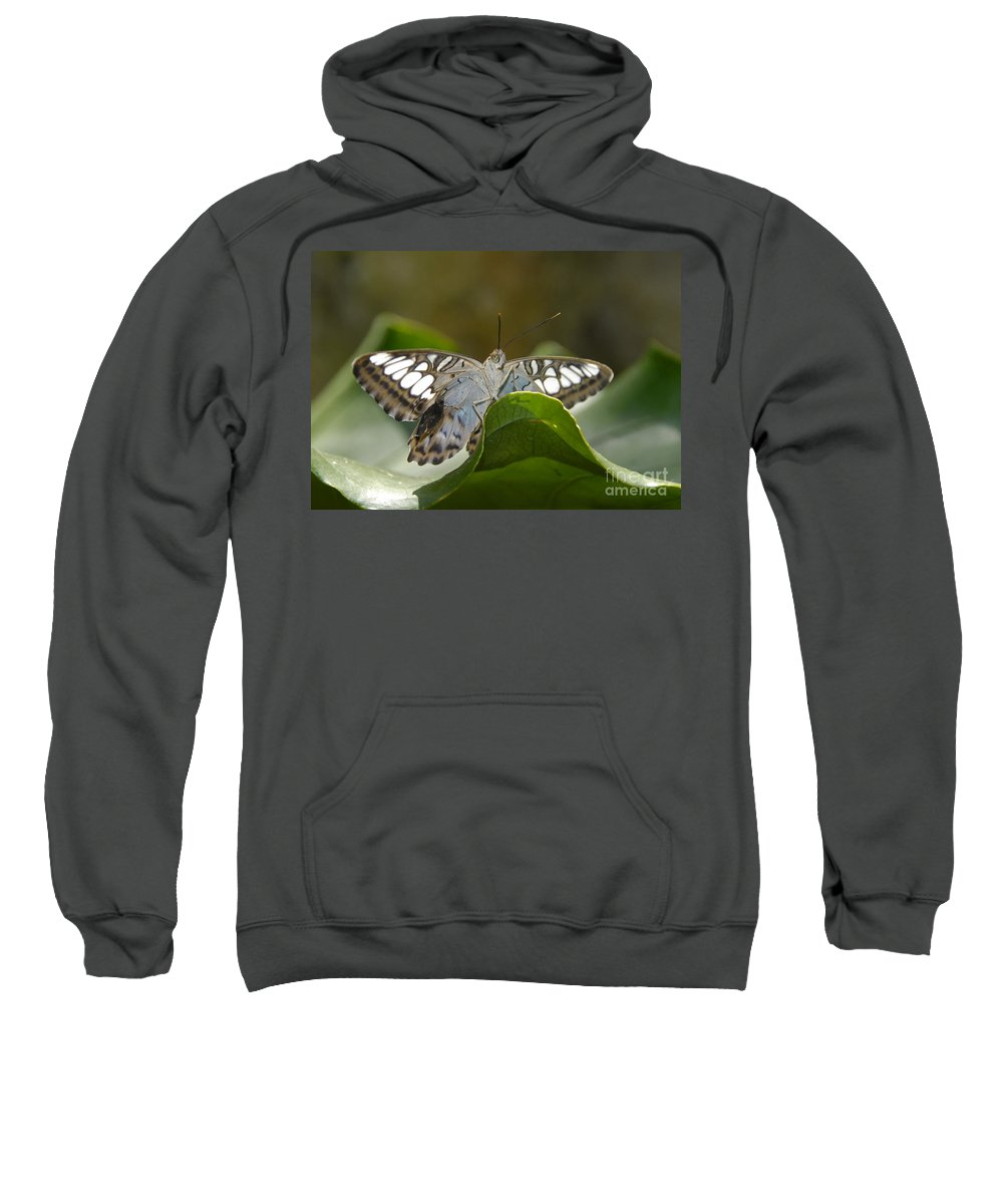 Pretty Sweatshirt featuring the photograph Butterfly Watching by David Lee Thompson