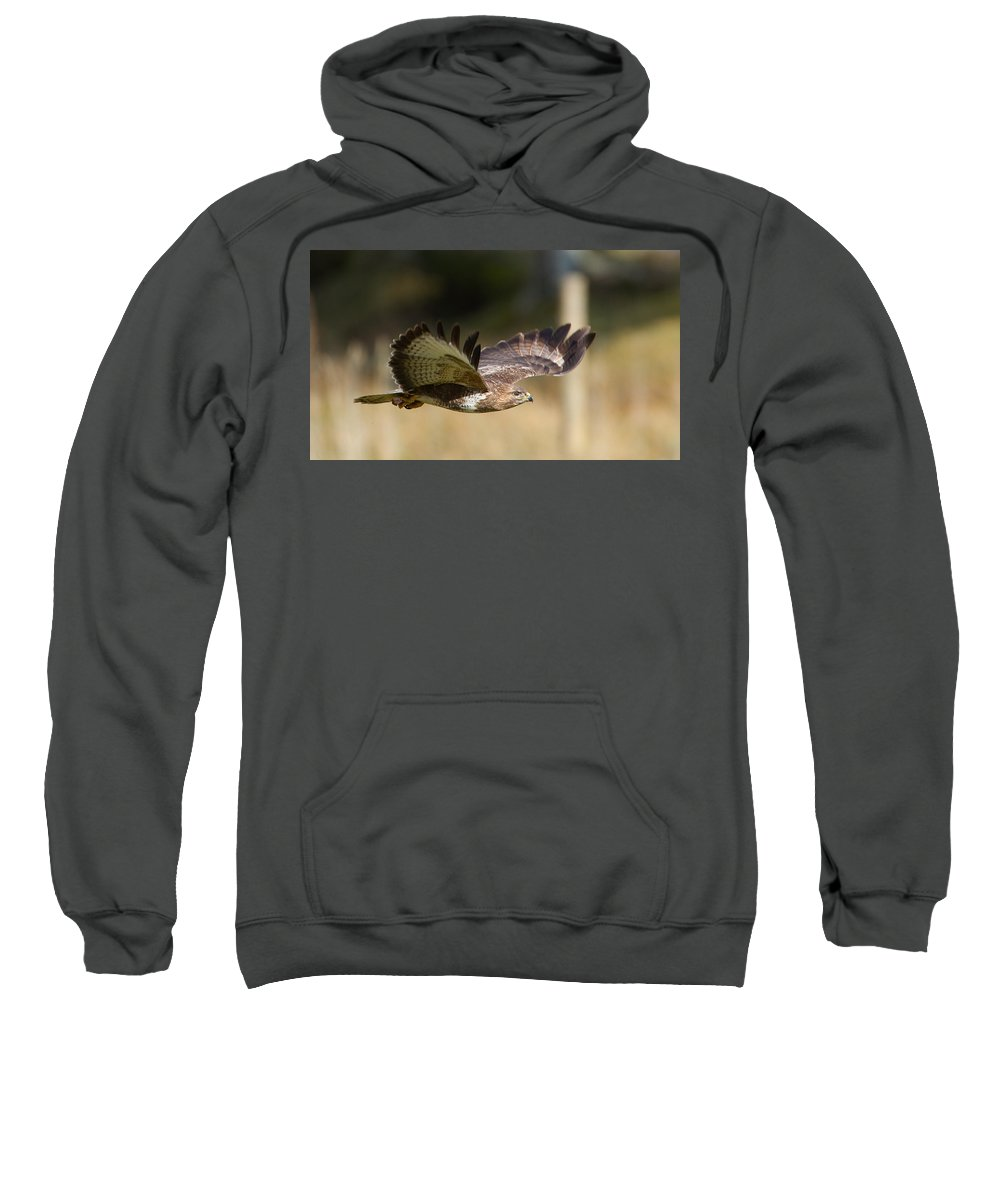 Buzzard In Flight Sweatshirt featuring the photograph Buzzard In Flight by Bob Kemp