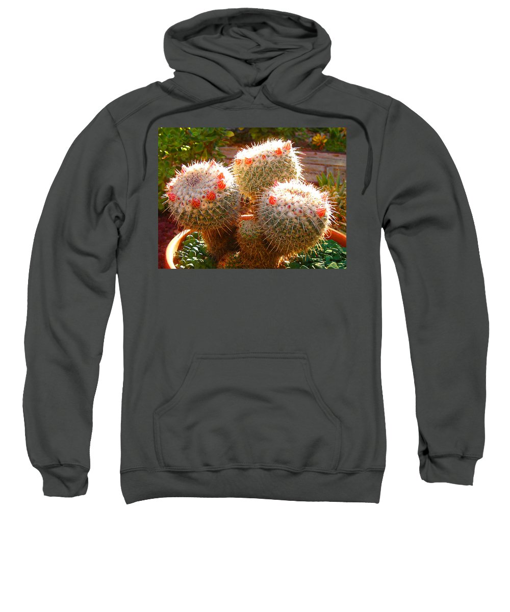 Landscape Sweatshirt featuring the photograph Cactus Buds by Amy Vangsgard