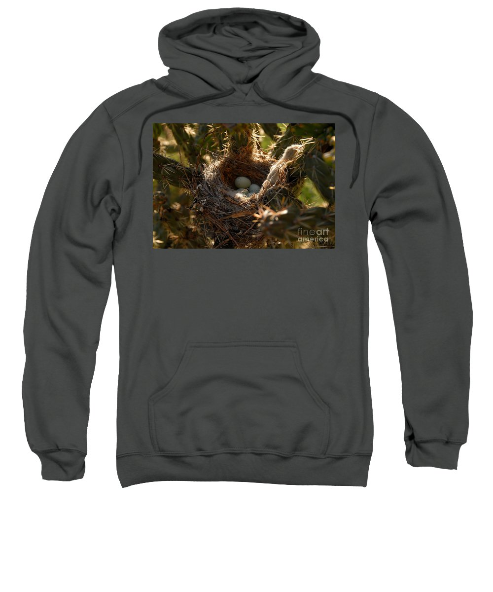 Cactus Sweatshirt featuring the photograph Cactus Nest by David Lee Thompson