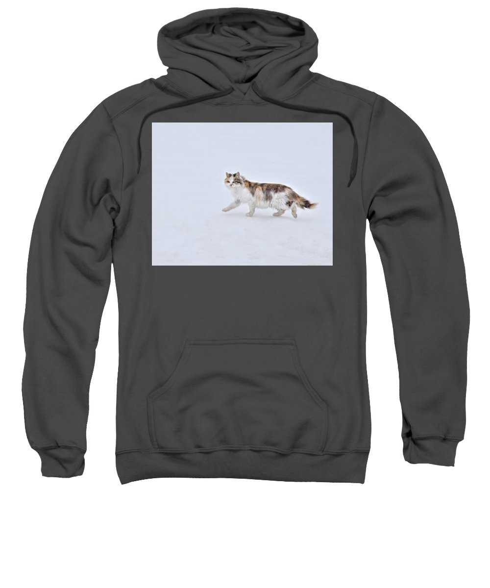 Calico Huntress Sweatshirt featuring the photograph Calico Huntress by Kathy M Krause