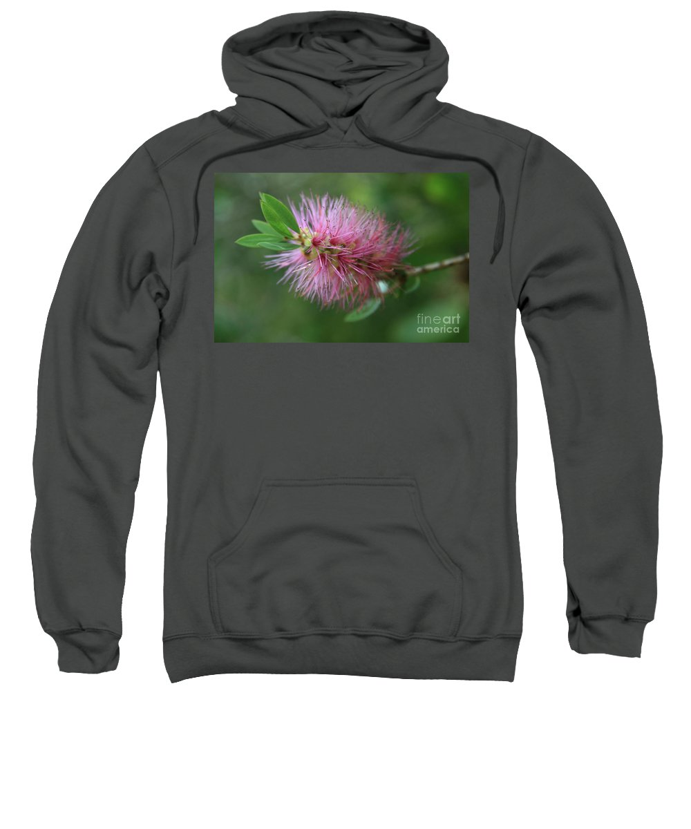 Callistemon Viminalis Sweatshirt featuring the photograph Callistemon Viminalis Taree Pink Weeping Bottlebrush Flowering Trees Of Hawaii by Sharon Mau