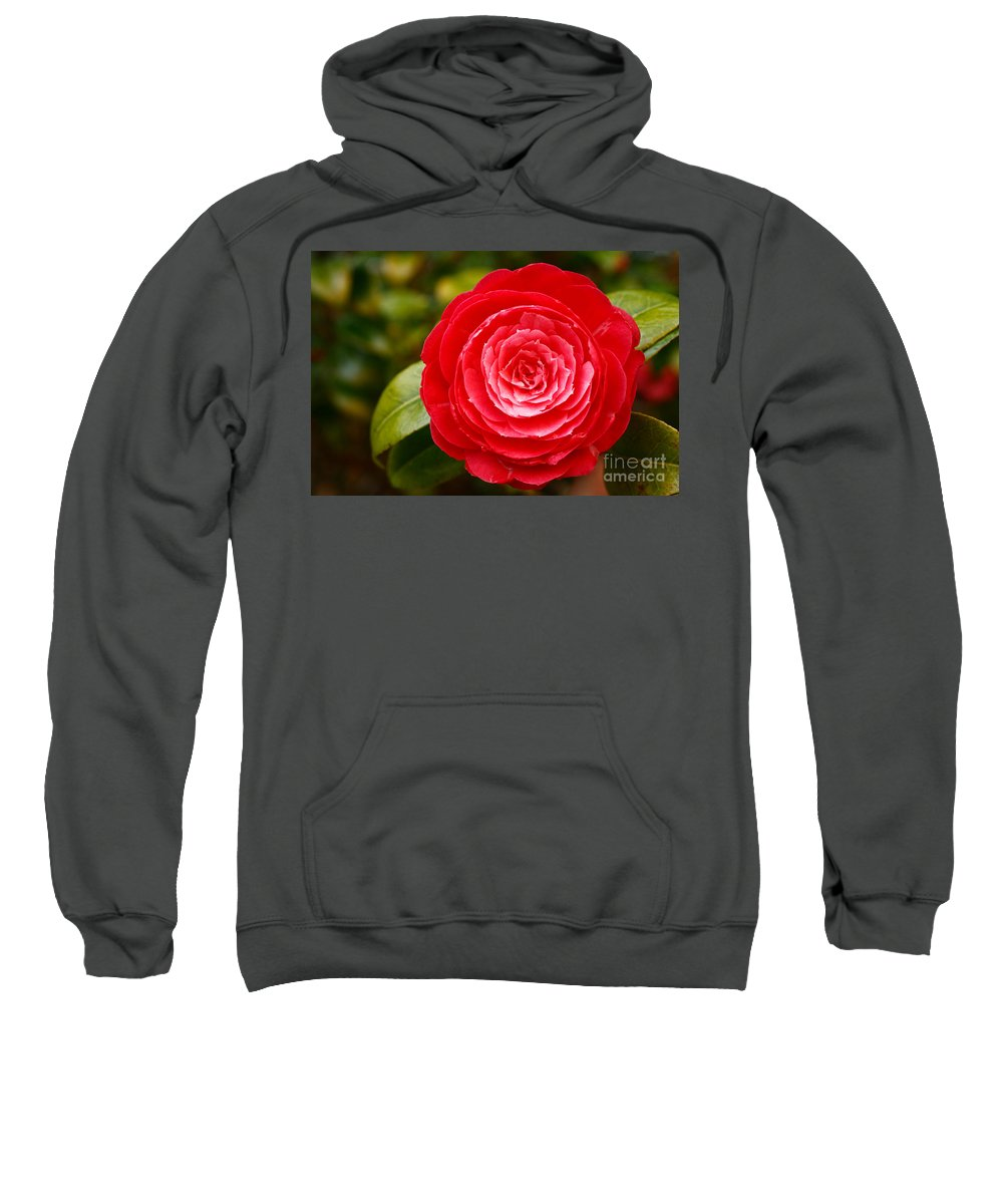 Azores Sweatshirt featuring the photograph Camellia Japonica by Gaspar Avila