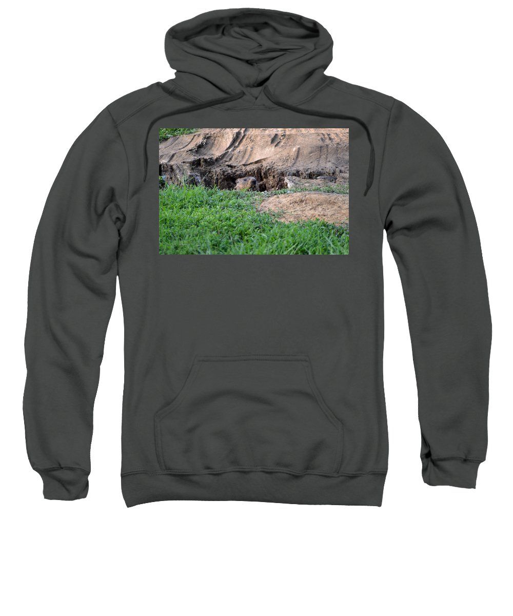 Groundhog Sweatshirt featuring the photograph Can I Come Out? by Belinda Stucki