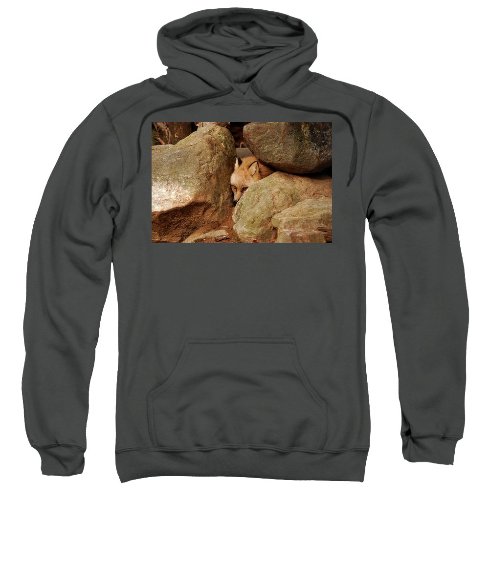 Fox Sweatshirt featuring the photograph Can I Come Out Yet by Lori Tambakis
