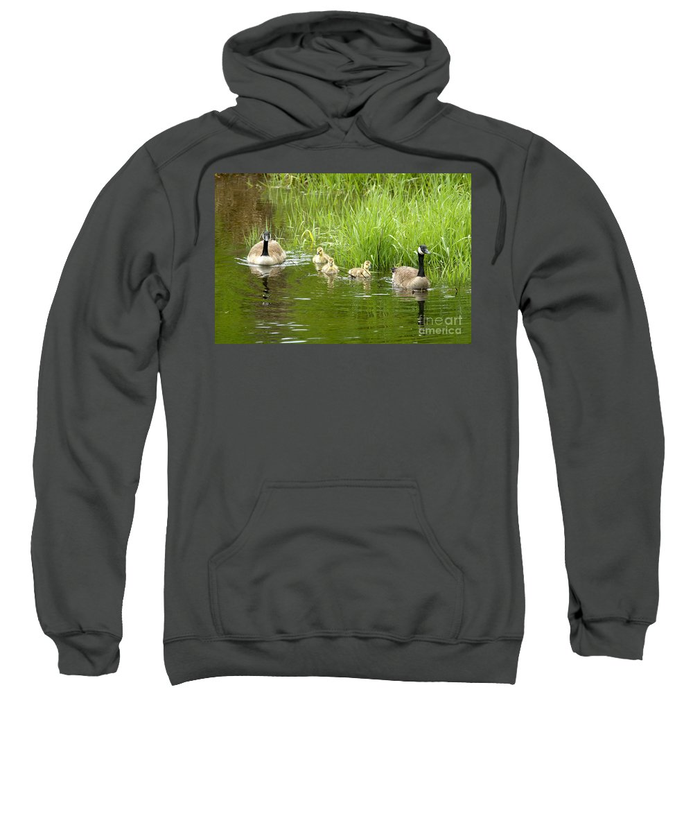 Canada Geese Sweatshirt featuring the photograph Canada Goose Family 2 by Sharon Talson