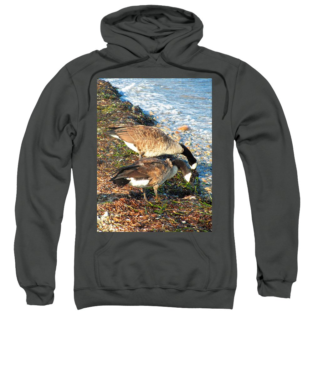 Canada Geese Sweatshirt featuring the photograph Cape Cod Beachcombers 2 by Mark Sellers