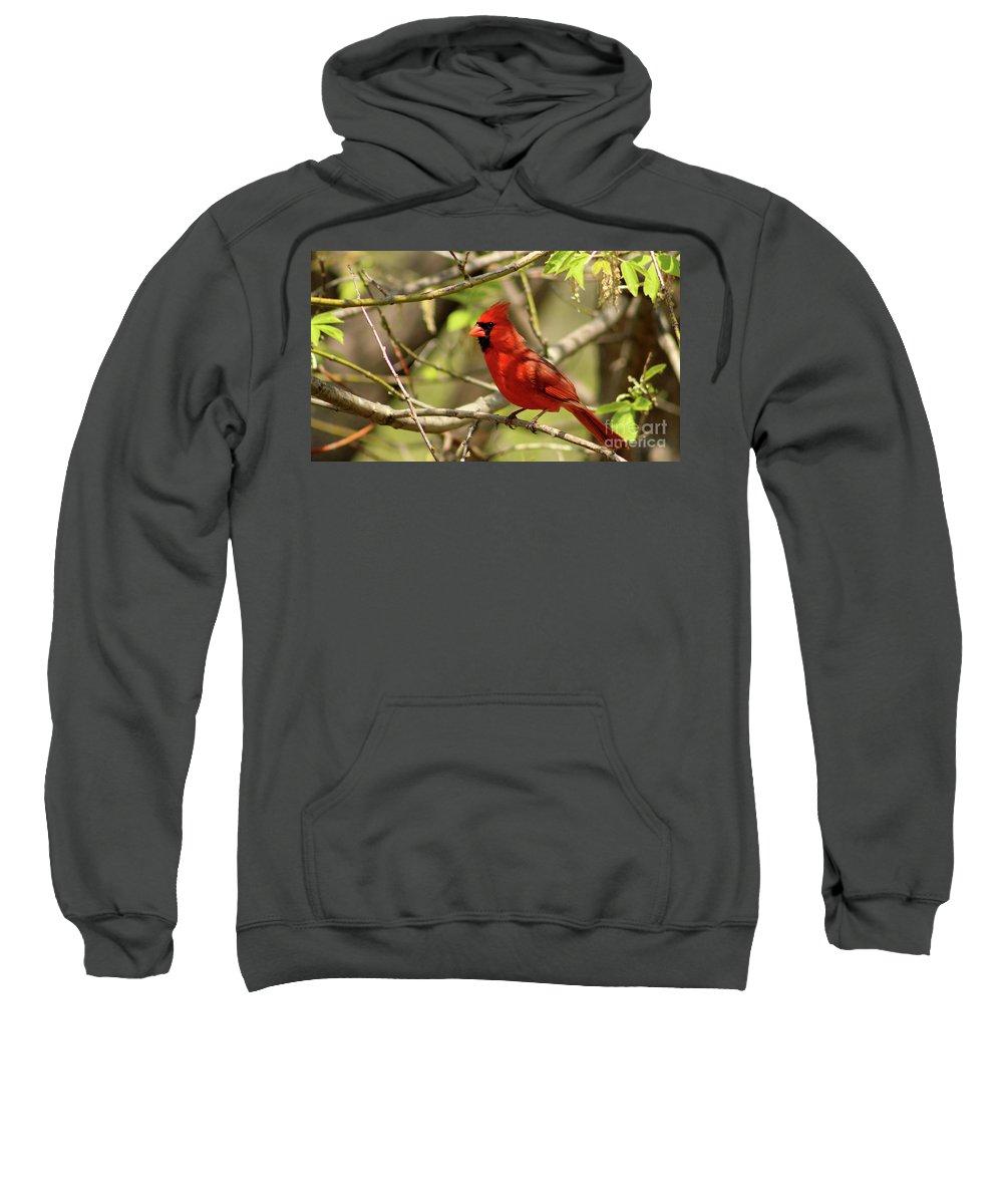 Bird Sweatshirt featuring the photograph Cardinal by Douglas Milligan