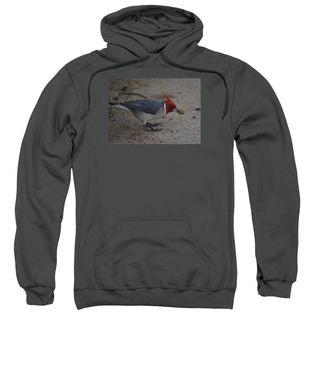 Cardinal Sweatshirt featuring the photograph Cardinal Examining Food by Karen Rose Warner