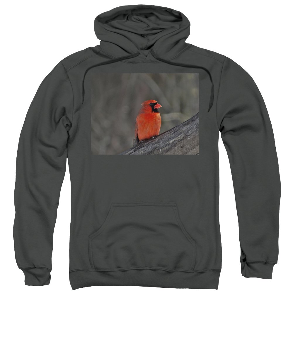 Cardinal Sweatshirt featuring the photograph Cardinal by Flo McKinley