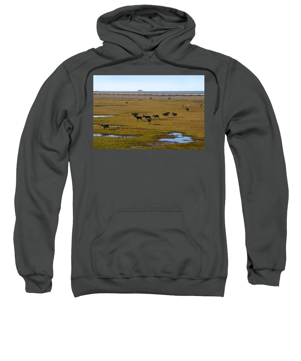 Caribou Sweatshirt featuring the photograph Caribou Herd by Anthony Jones