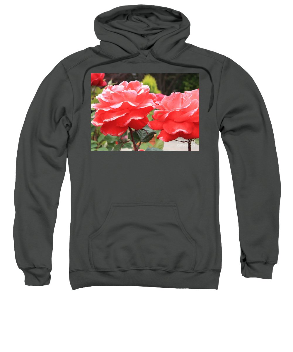 Carmel Mission Sweatshirt featuring the photograph Carmel Mission Roses by Carol Groenen