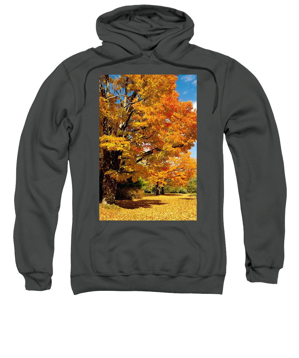 Foliage Sweatshirt featuring the photograph Carpet Of Leaves by Greg Fortier