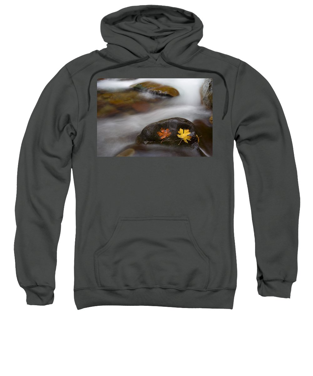 Leaves Sweatshirt featuring the photograph Castaways by Mike Dawson