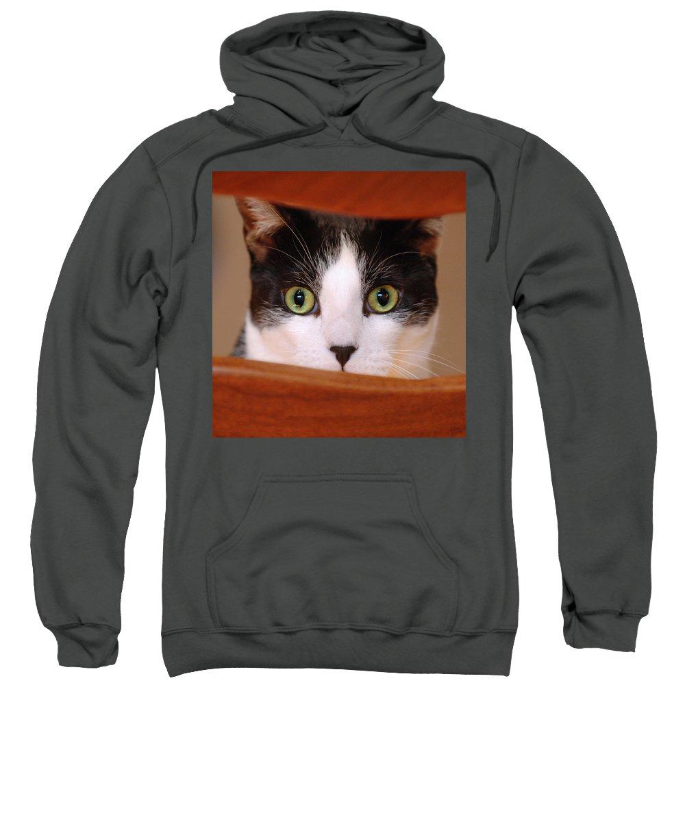 Pet Sweatshirt featuring the photograph Cat Eyes by Jill Reger