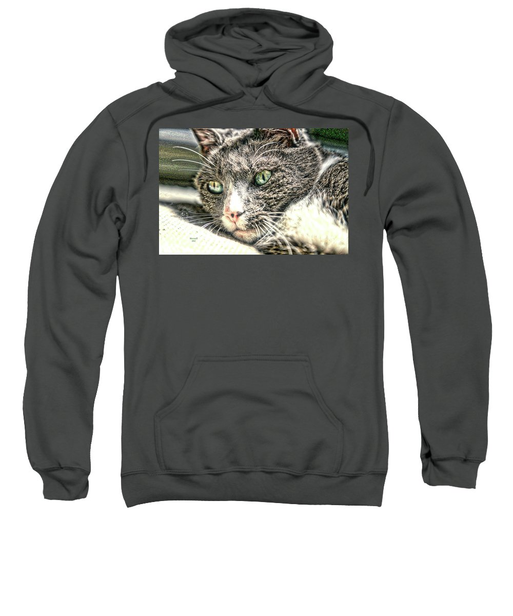 Cat Sweatshirt featuring the photograph Cats Eyes by Dennis Baswell