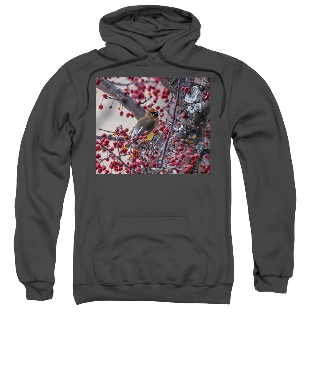 Waxwing Sweatshirt featuring the photograph Cedar Waxwing by Andre Moraes