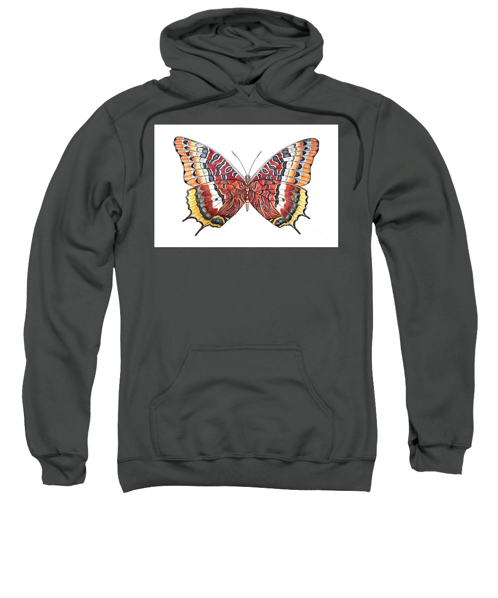 Butterfly Sweatshirt featuring the painting Charaxes Butterfly by Lucy Arnold
