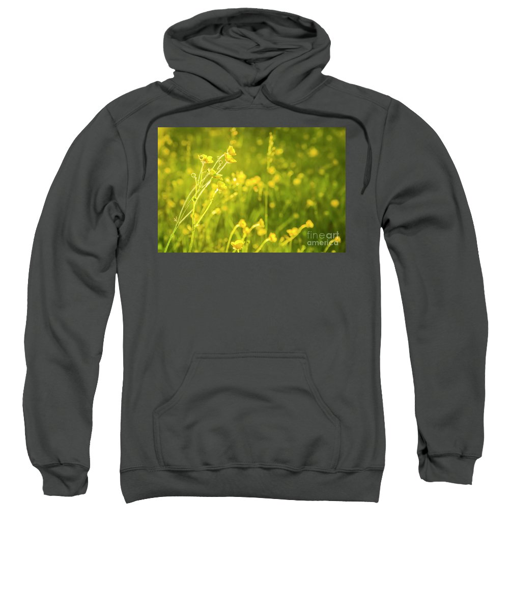 Buttercup Sweatshirt featuring the photograph Cheery Buttercups by Amy Sorvillo