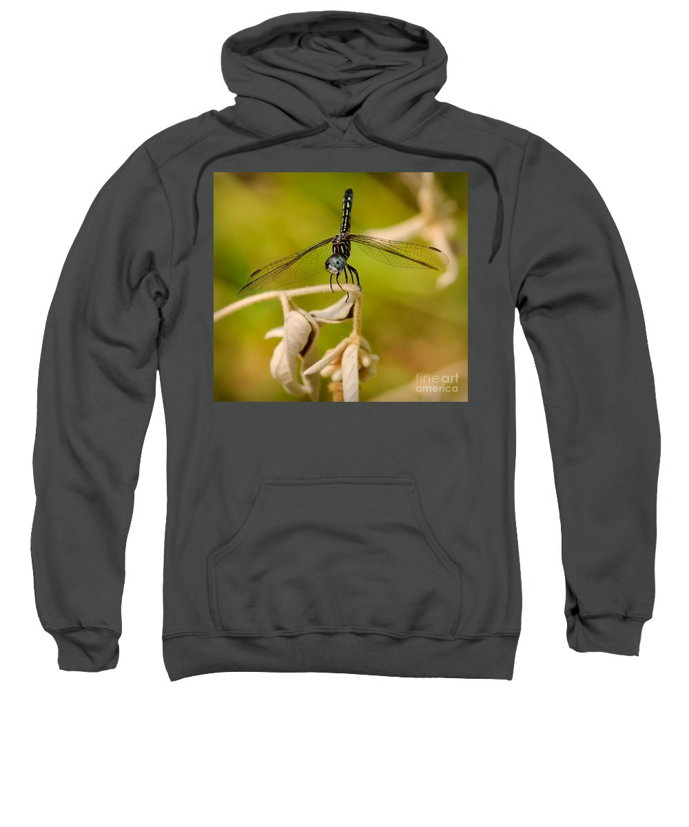 Cheese Sweatshirt featuring the photograph Cheese by Charles Dobbs
