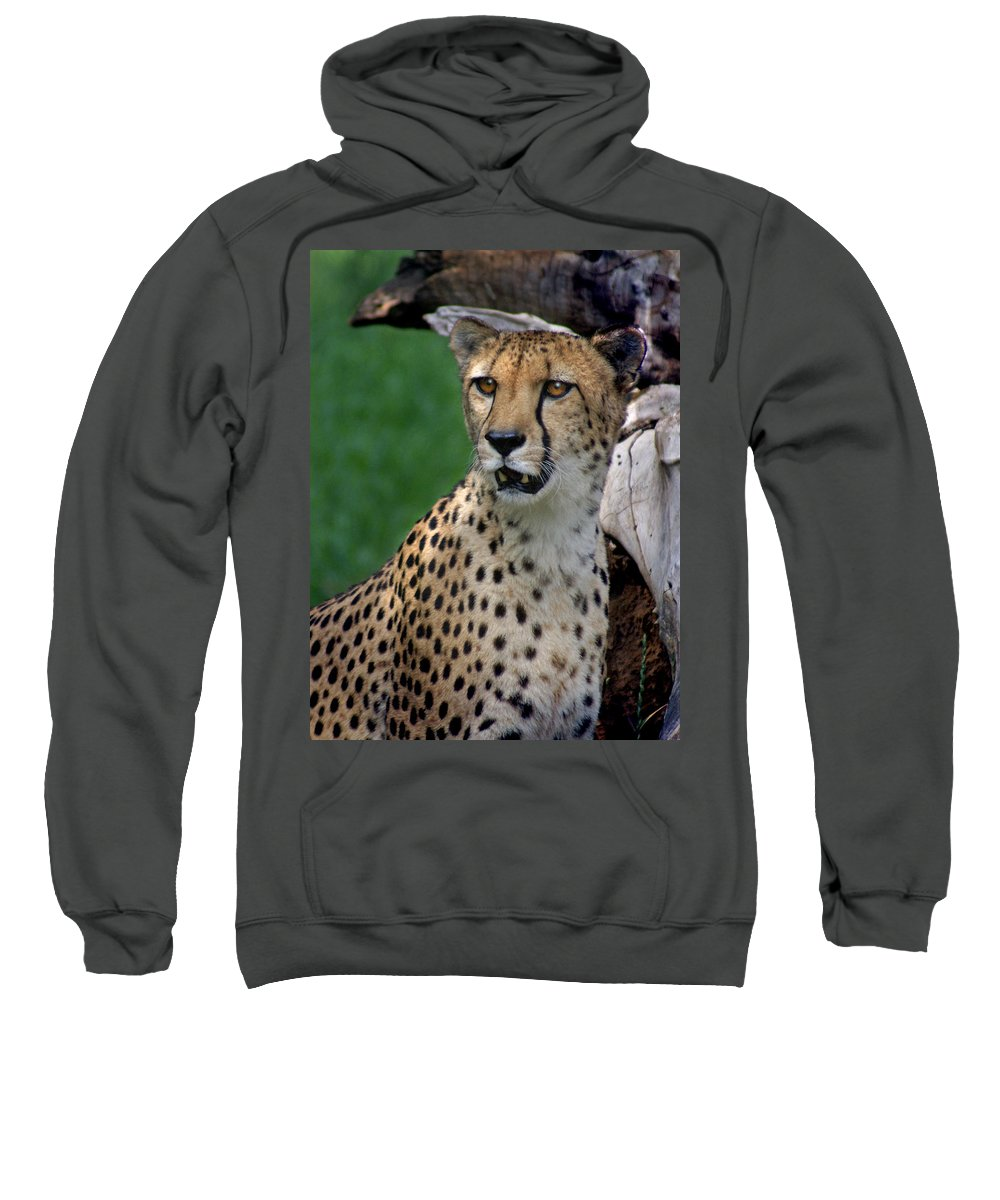 Cheeta Sweatshirt featuring the photograph Cheetah by Heather Coen