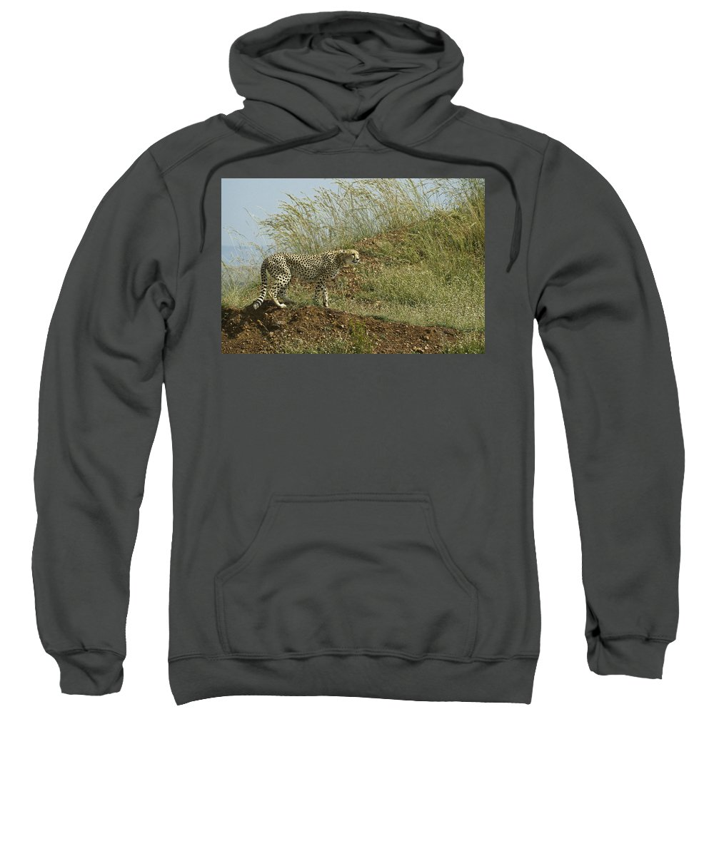 Africa Sweatshirt featuring the photograph Cheetah On The Prowl by Michele Burgess