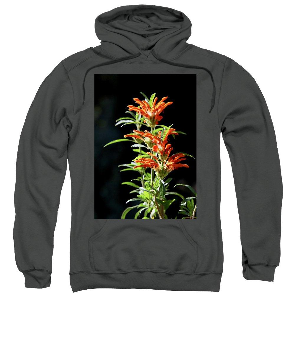 Flower Sweatshirt featuring the photograph Cheeto Plant Portrait by Erin Finnegan