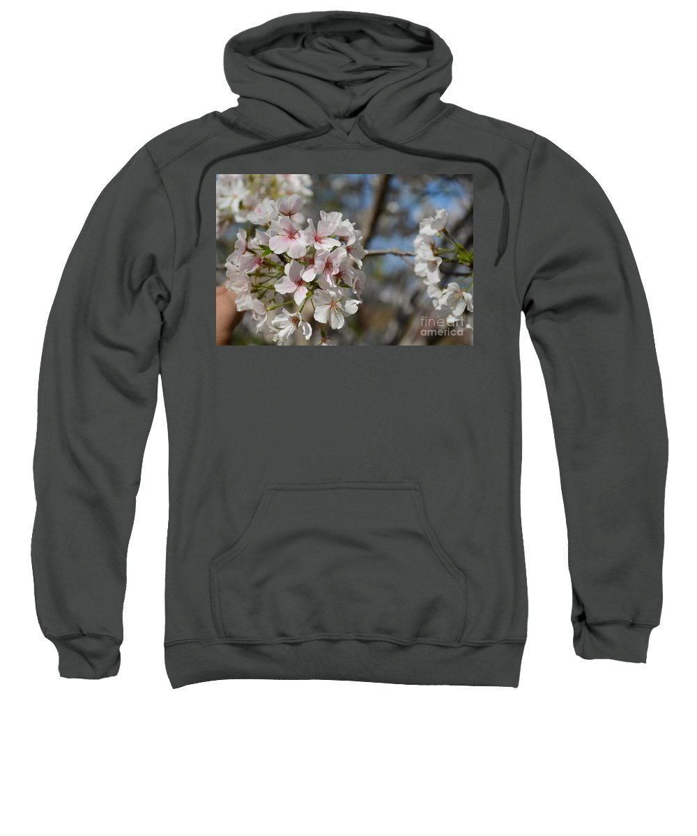Sweatshirt featuring the painting Cherry Blossom Cluster by Constance Woods
