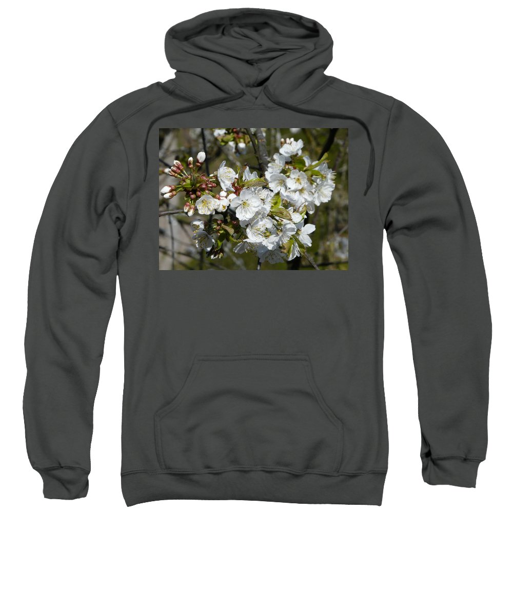Cherry Sweatshirt featuring the photograph Cherry Blossom by Valerie Ornstein