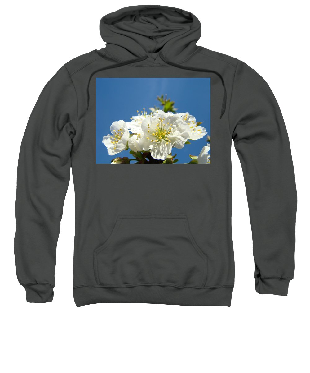 Blossom Sweatshirt featuring the photograph Cherry Blossoms Art White Spring Tree Blossom Baslee Troutman by Baslee Troutman
