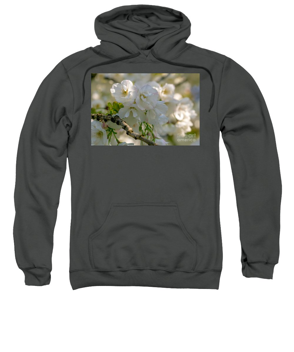 Cherry Blossom Sweatshirt featuring the photograph Cherryblossom Flowers 2 by Marc Daly