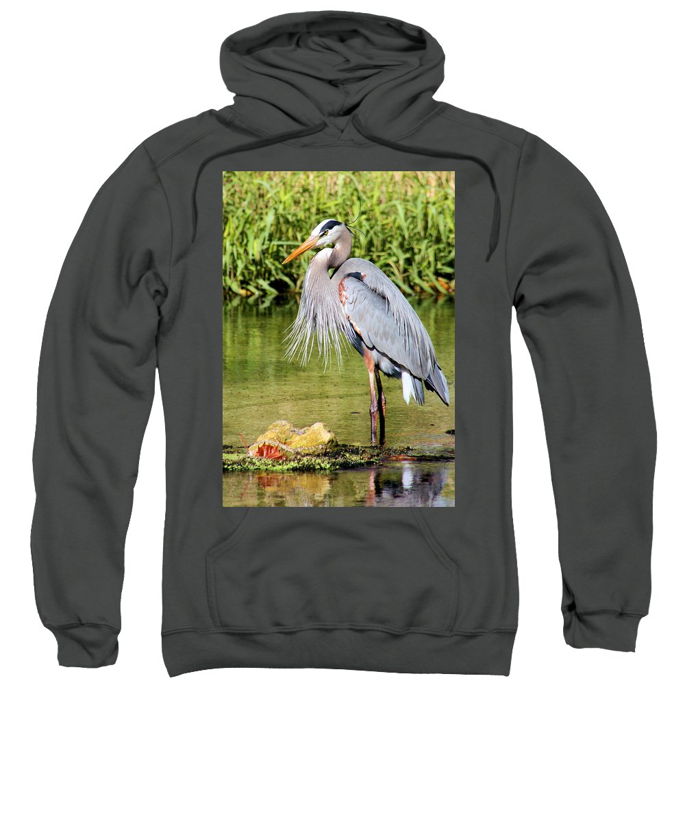 Great Blue Heron Sweatshirt featuring the photograph Chest Feathers by Kristin Elmquist