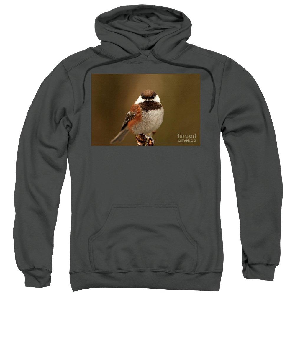 Chestnut-backed Chickadee Sweatshirt featuring the photograph Chestnut-backed Chickadee by Sharon Talson