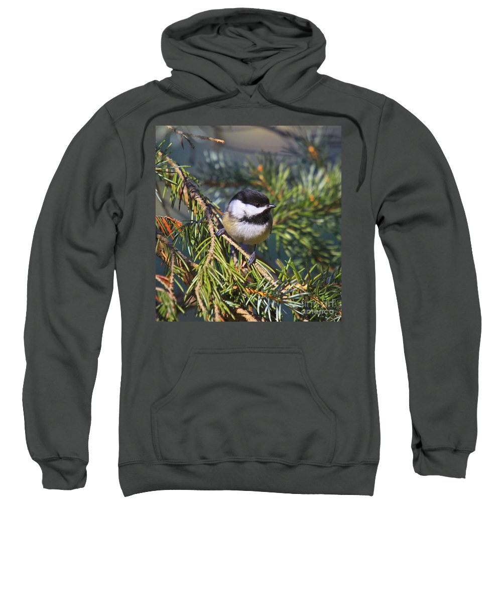 Additional Tags: Sweatshirt featuring the photograph Chickadee-12 by Robert Pearson