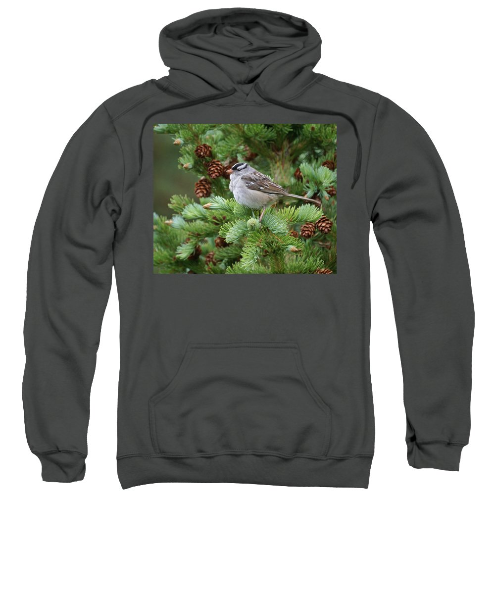 Chickadee Sweatshirt featuring the photograph Chickadee by Heather Coen