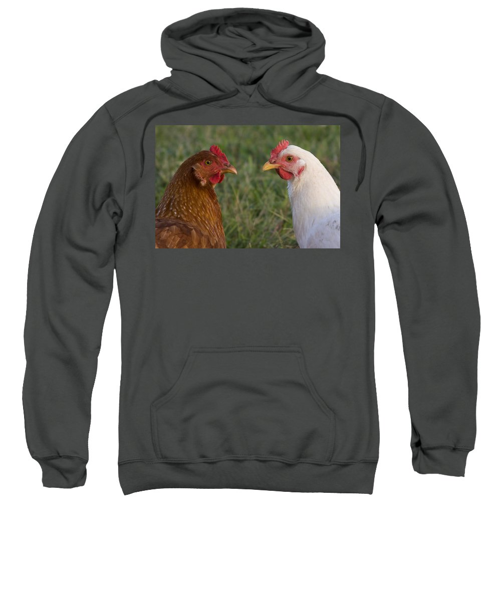 Chicken Hen Farm Rural Curious Bird Country Sweatshirt featuring the photograph Chickens by Andrei Shliakhau
