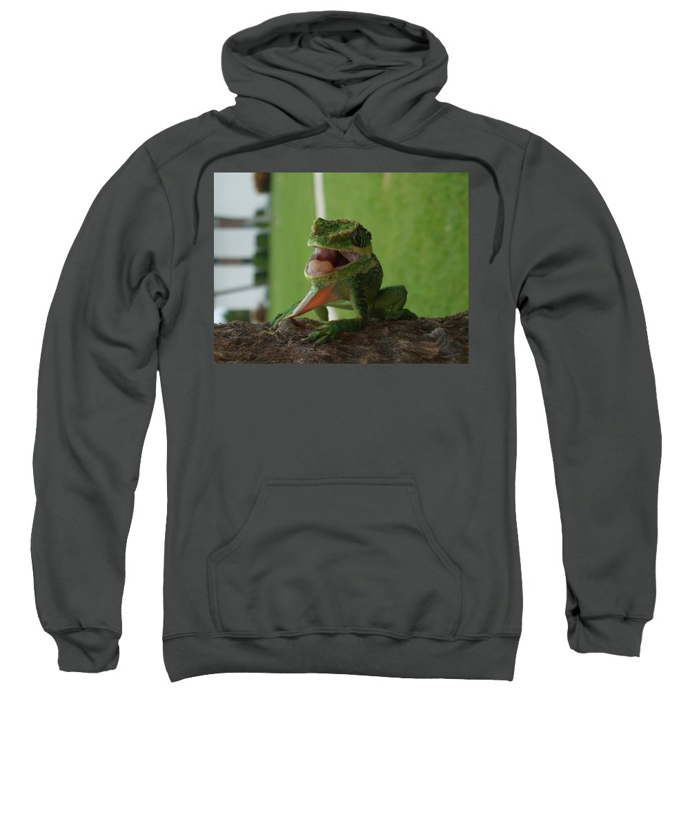Iguana Sweatshirt featuring the photograph Chilling On Wood by Rob Hans