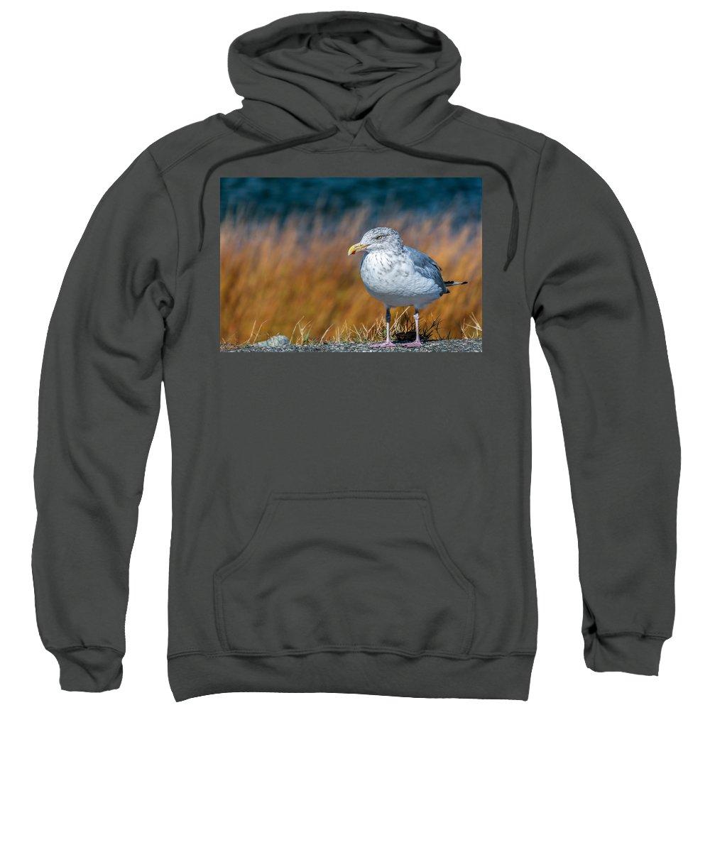 Laura Duhaime Sweatshirt featuring the photograph Chilling Seagull by Laura Duhaime