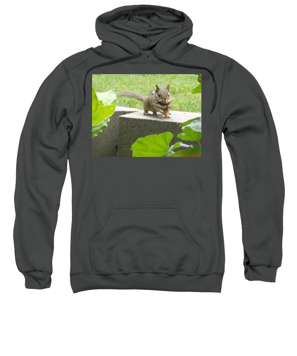 Chipmunk Ground Squirrel Sweatshirt featuring the digital art Chipmunk by Janie Norris