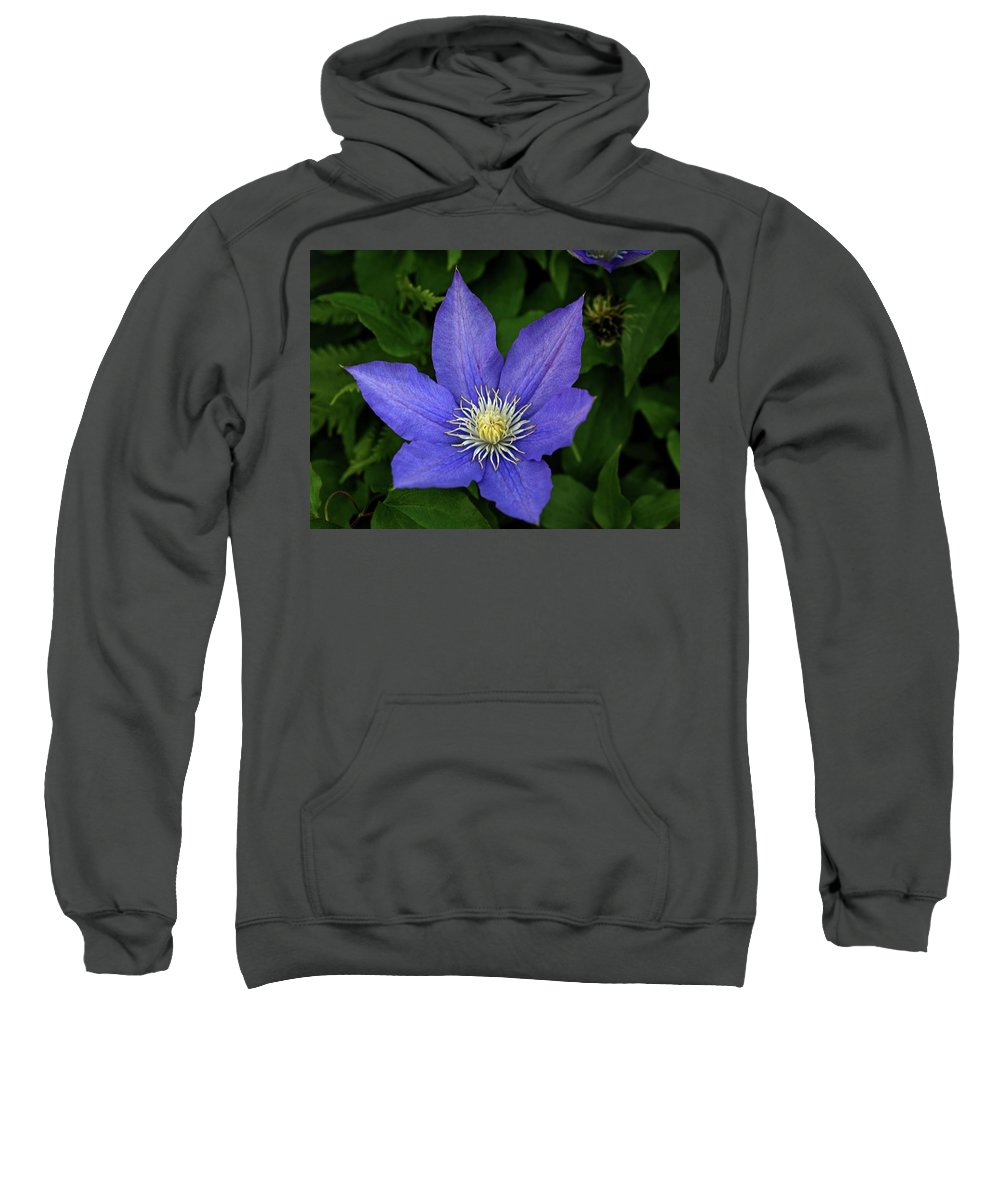 Flowers Sweatshirt featuring the photograph Clematis by Sandy Keeton