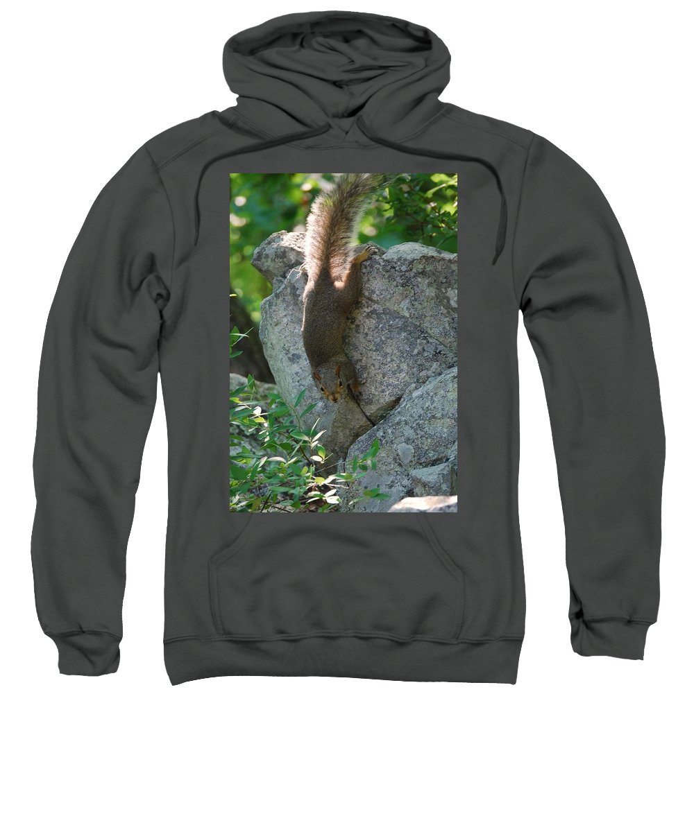 Squirrel Sweatshirt featuring the photograph Cliff Hanger by Eric Liller