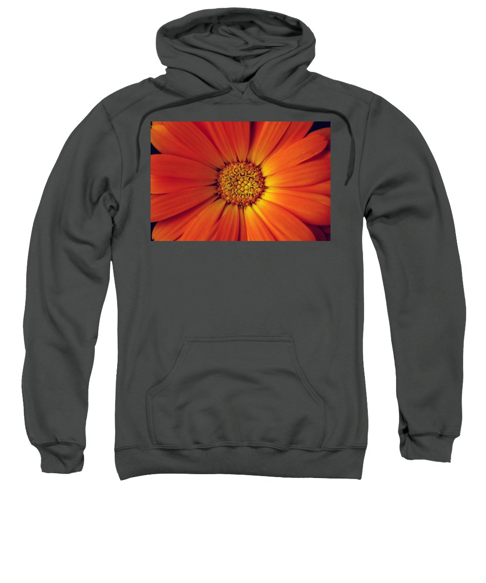 Plant Sweatshirt featuring the photograph Close Up Of An Orange Daisy by Ralph A Ledergerber-Photography