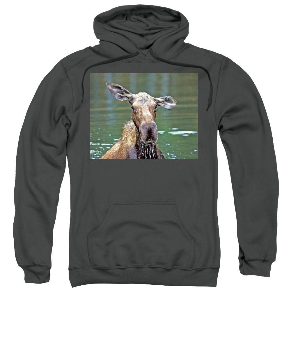 Moose Sweatshirt featuring the photograph Close Wet Moose by Gary Beeler