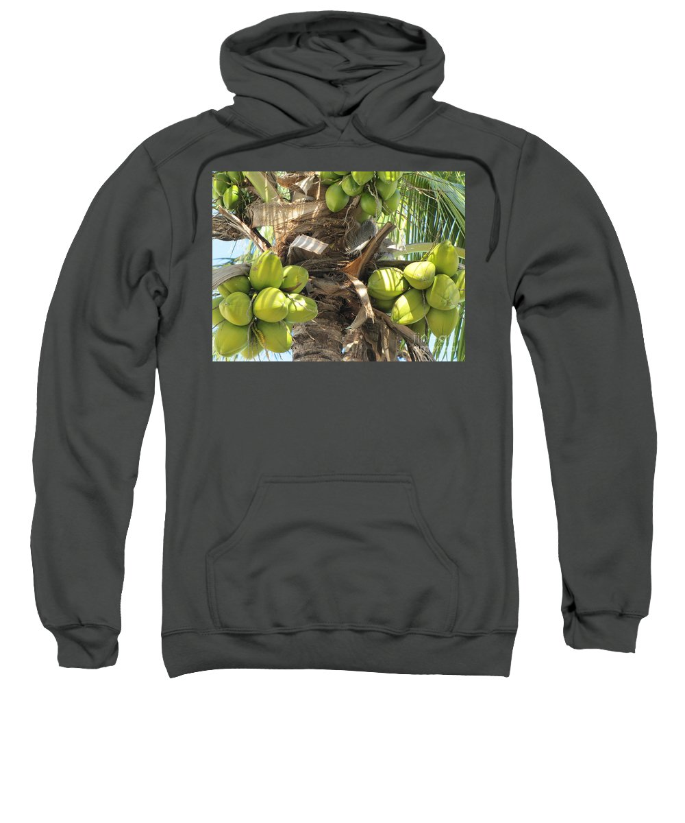 Fruit Sweatshirt featuring the photograph Coconuts by Michelle Powell
