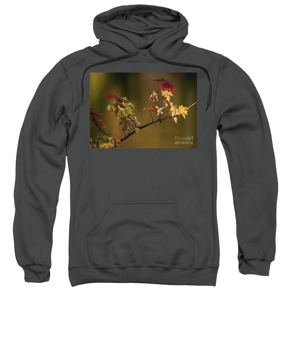 Fall Sweatshirt featuring the photograph Color On A Stick by Robert Pearson