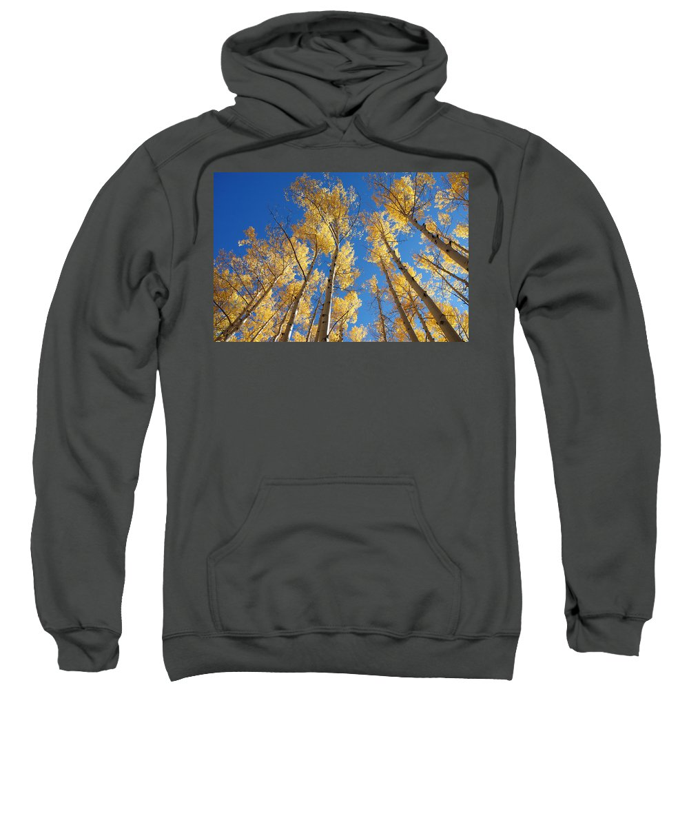 Aspen Sweatshirt featuring the photograph Colorado Aspen by Jerry McElroy