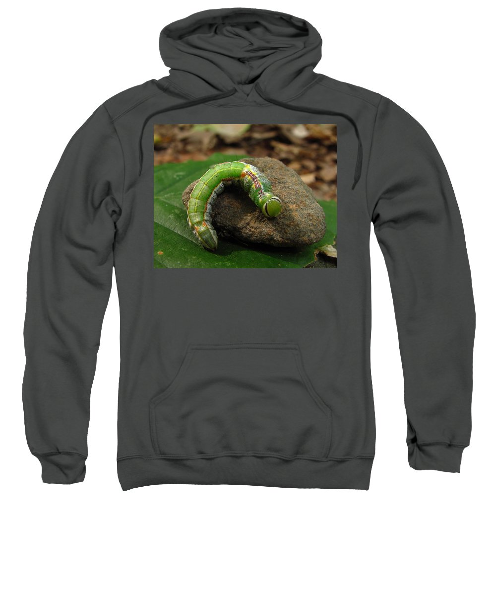 Colorful Caterpillar Images Colorful Caterpillar Prints Unidentified Caterpillar Images Unidentified Caterpillar Prints Forest Ecology Entomology Biodiversity Nature Oldgrowth Forest Preservation Beech Trees Sweatshirt featuring the photograph Colorful Caterpillar by Joshua Bales