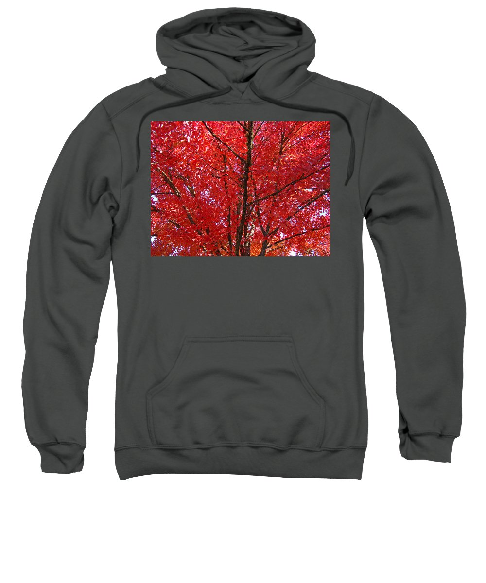 Autumn Sweatshirt featuring the photograph Colorful Red Orange Fall Tree Leaves Art Prints Autumn by Baslee Troutman