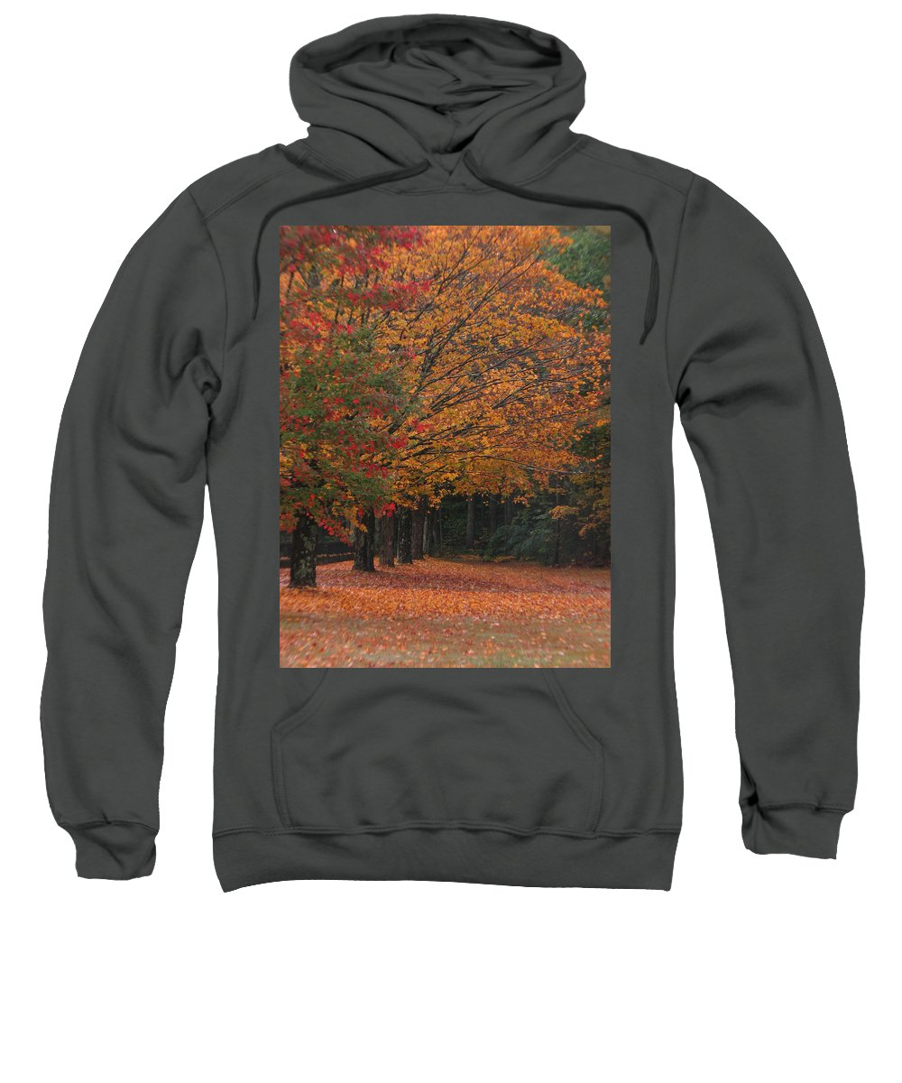 Fall Trees Sweatshirt featuring the photograph Colorful Trees by Michael Mooney