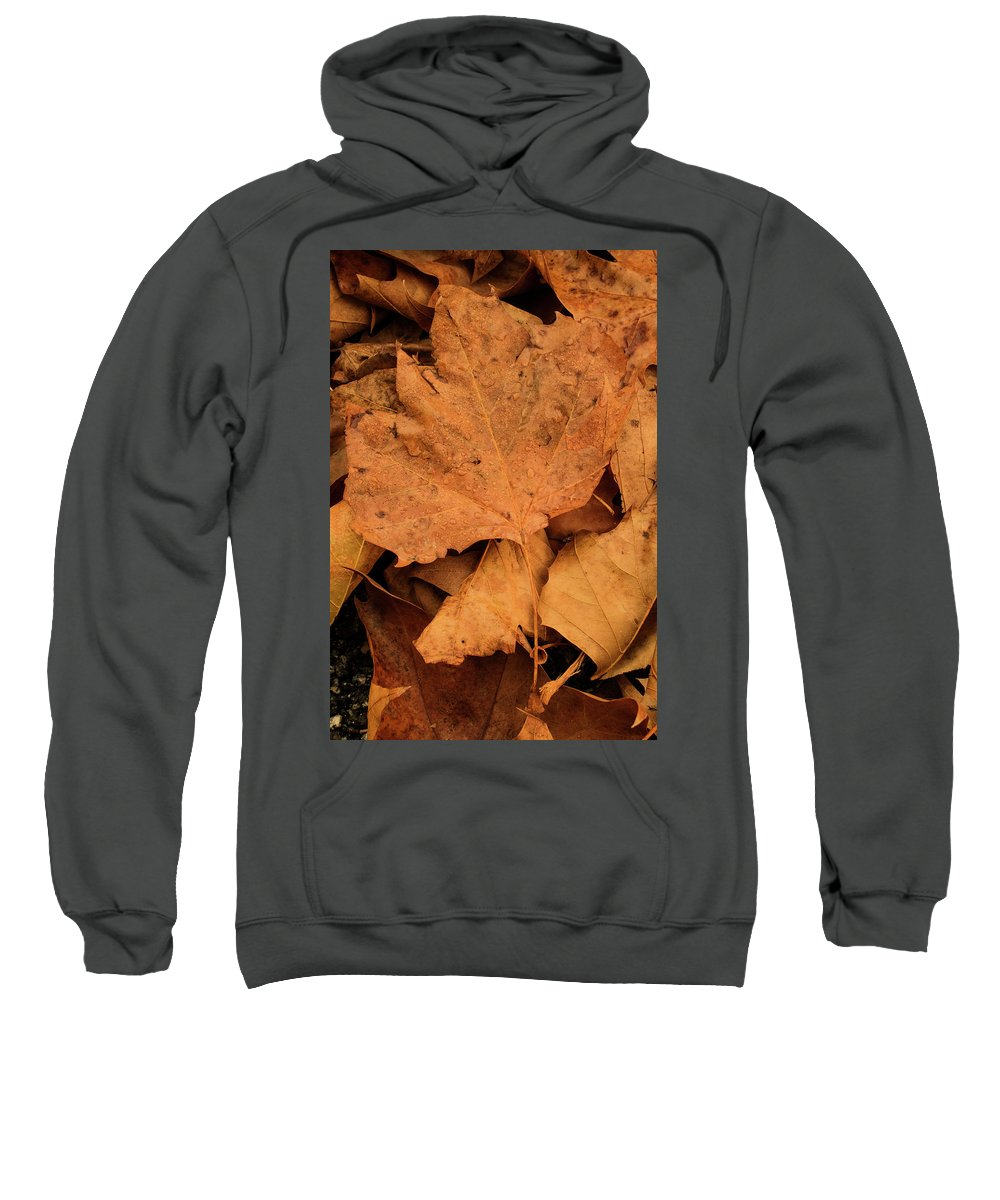 Winter Sweatshirt featuring the photograph Colors Of Winter by Antonio Rei